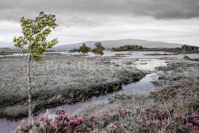 The barren beauty of Rannoch Moor