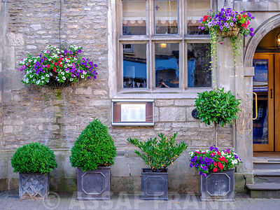 Different types of pottes plants outside a building in Tetbury, Cotswolds