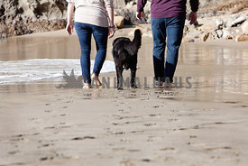 Dog with Owners Walking on the Sandy Beach Shoreline
