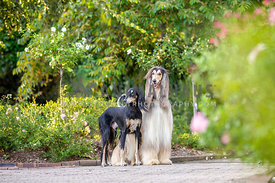 Two dogs looking elegant in a garden