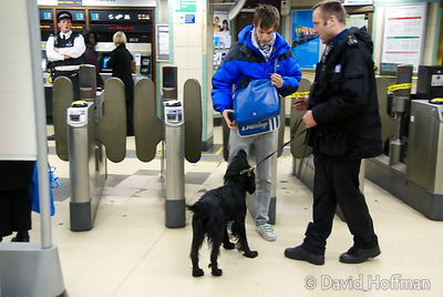 071129_DogDrugCheck_099 Police drug check with sniffer dogs at Mile End Underground station, London. December 2007. In this p...