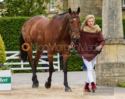 Felicity Collins and COUMROE CALVA at the trot up, Equitrek Bramham Horse Trials 2019