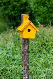 Yellow bird house in a spring ∞ Nichoir jaune dans un jardin, France, Moselle, printemps
