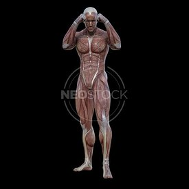 cg-body-pack-male-muscle-map-neostock-45