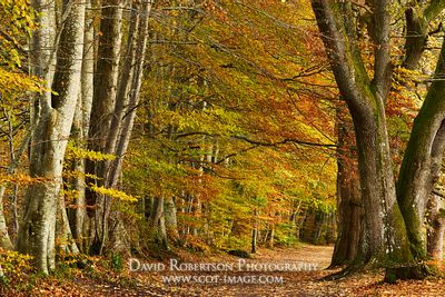 Image - Lady Mary's Walk, in autumn, Crieff, Perthshire, Scotland