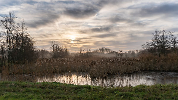 Sunrise above the marshy waterlands of Diemerbos