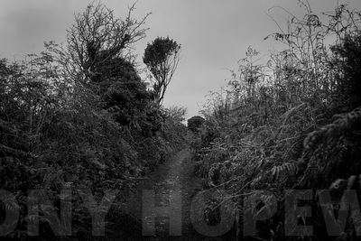 Holloways_and_Tramways-1000475