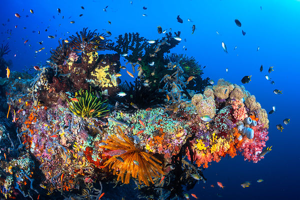 Raja Ampat, the rainbow of biodiversity!