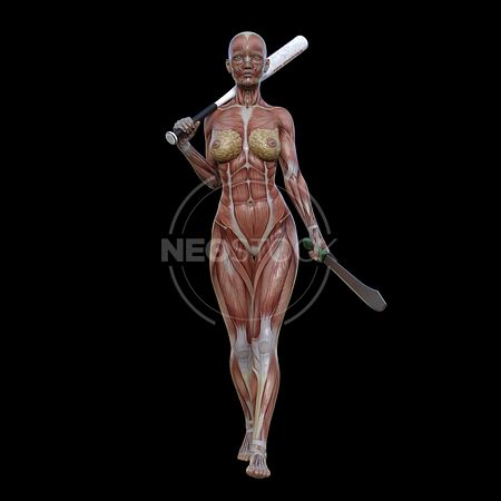 cg-body-pack-female-muscle-map-neostock-17
