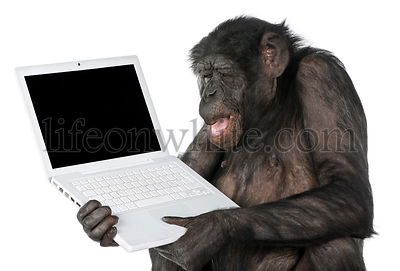Monkey looking at an empty computer screen