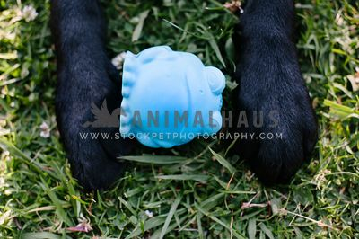 A close up of a black dog's feet with a frog toy between his paws