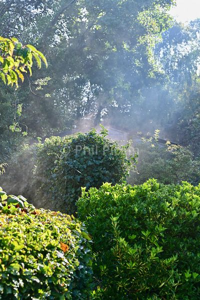 Early morning mist rising off the trees and bushes.
