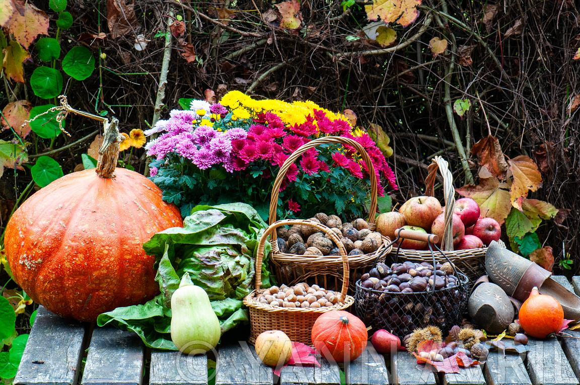 Harvest of dried fruits and vegetables in a garden in autumn