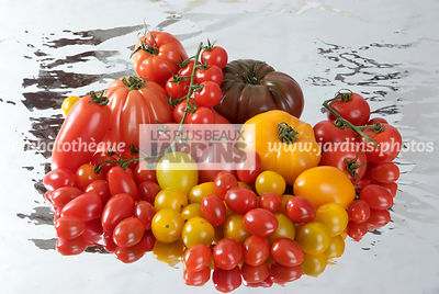 Assortiment de tomate (Lycopersicum esculentum), légume, nature morte