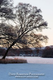 Image - Tree beside the ice covered Lake of Menteith