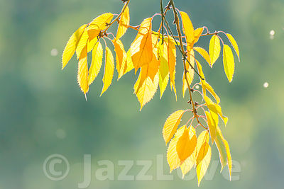 Yellow leaves on bright, green background