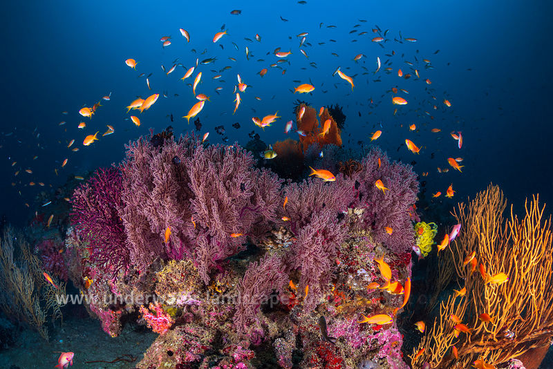 Marine life of Similan