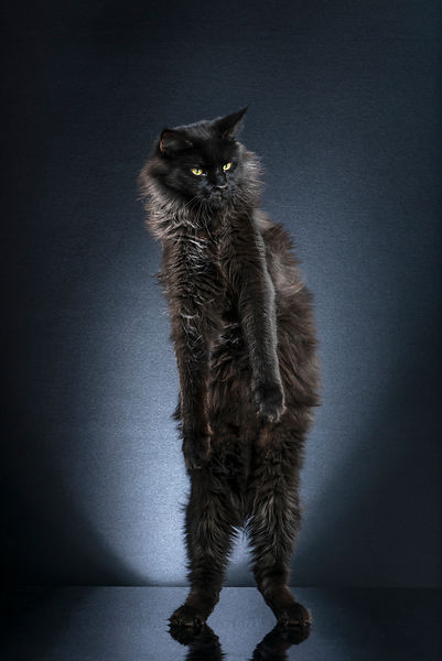 STANDING CATS -  LOONY