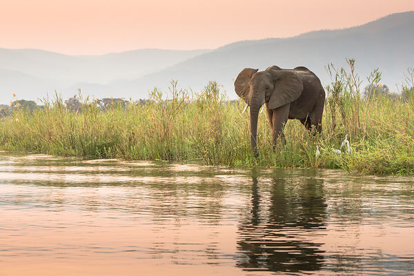 Elephants on Zambezi Riverbank