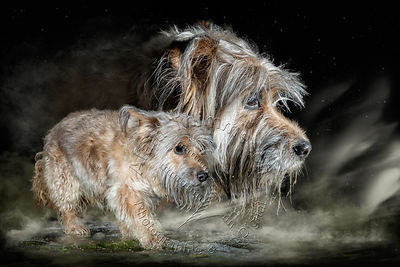 2020-Art-Digital-Alain-Thimmesch-Chien-28