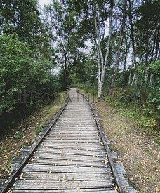 Wooden Pathway over the forest at the Dunes of Authie