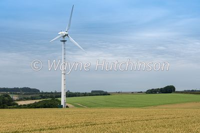 Field of wheat ripening with a wind turbine among the crop. North Yorkshire, UK.
