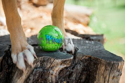 A dog standing on a stump with a grass covered ball between it's feet