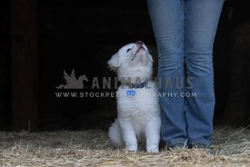 puppy sitting beside girl looking up at her - left side