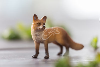 Toy animal fox