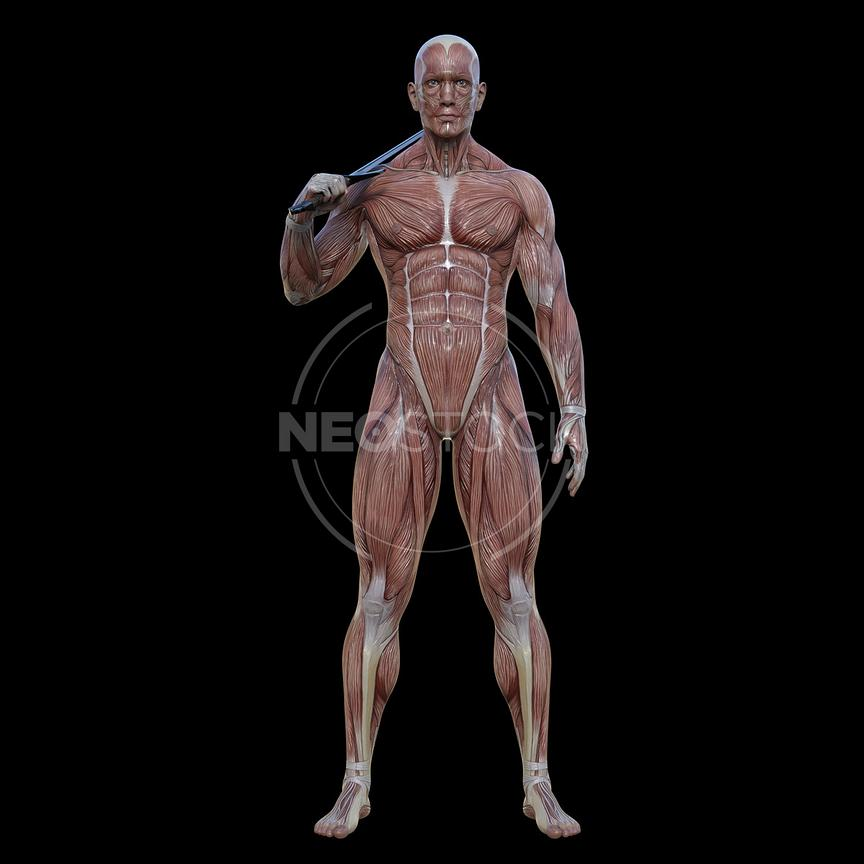 cg-body-pack-male-muscle-map-neostock-7