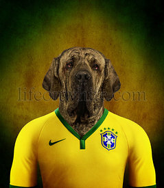 Brazilian Mastiff wearing a Brazilian football jersey with the colors of the flag in the background