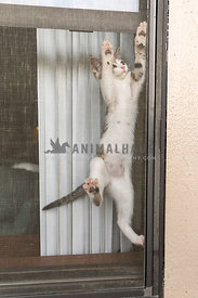A kitten climbing a window screen