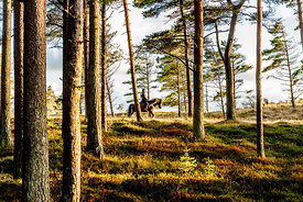 Woman riding horse in Thy, Denmark 2
