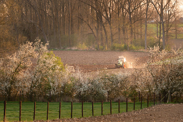 Spring evening and plowing tractor on the field