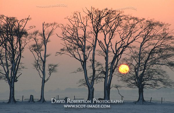 Image - Trees and a winter sunset