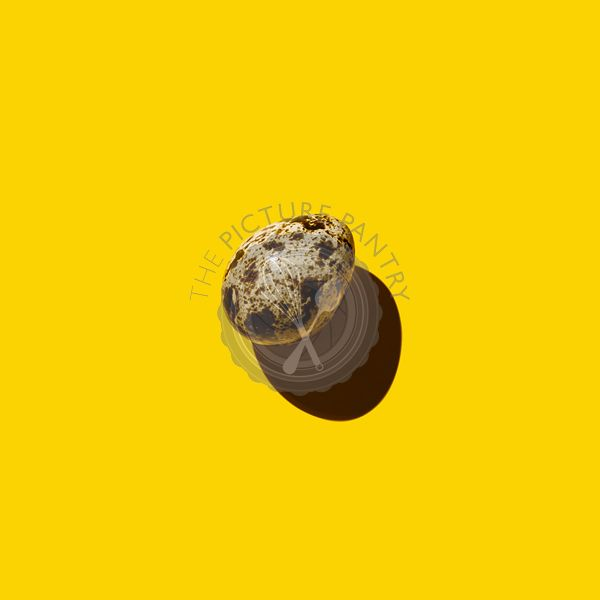 Quail egg on yellow background