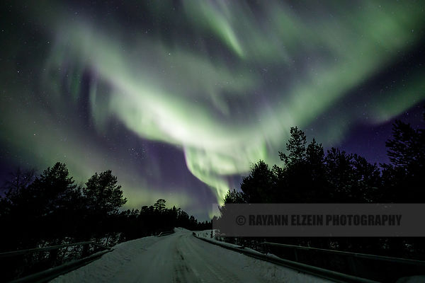 Ribbons of Aurora dancing above the road through the forest near Inari in Finnish Lapland