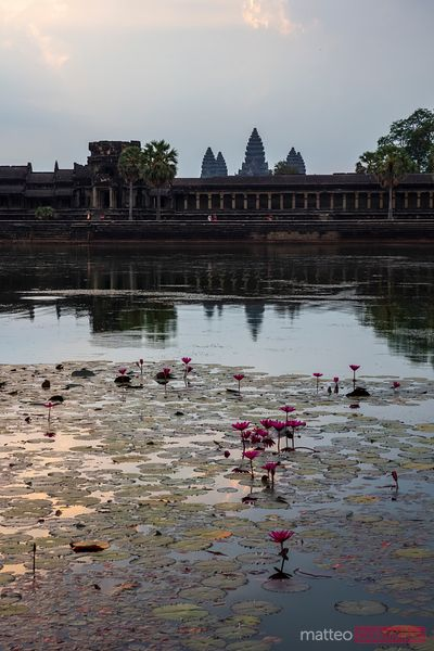 Pond with water lily in front of Angkor Wat temples
