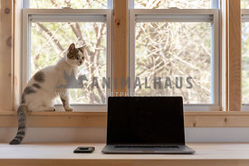 A tabby cat sits in the window of an at home office
