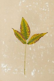isolated_leaf_022