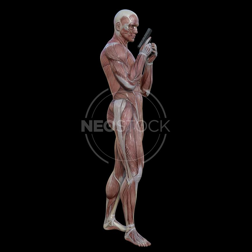 cg-body-pack-male-muscle-map-neostock-17