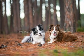 Two dogs in a forest