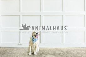 Beagle-mix dog sits in front of white wooden garage door