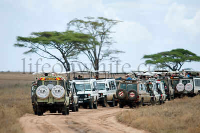 Vehicles on safari in Serengeti National Park, Serengeti, Tanzania, Africa