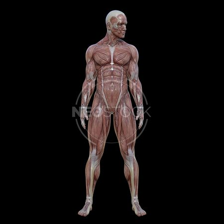 cg-body-pack-male-muscle-map-neostock-23