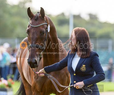 Dee Kennedy and CHEQUERS PLAYBOY at the trot up, Land Rover Burghley Horse Trials 2019