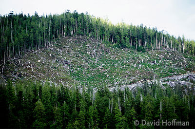 Clearcutting forest on Vancouver Island. Mostly Western Red Cedar & Hemlock are cut for sawmills & pulping for paper. The fel...