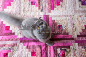 Kitten on pink quilt looking up at camera