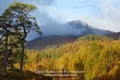 Image - Glen Affric in autumn, Highland, Scotland