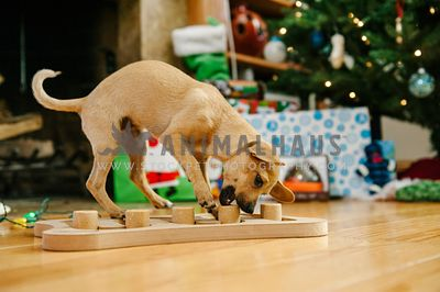 A small dog playing with a wooden food puzzle in front of some Christmas gifts and a tree